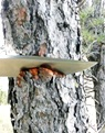 Trailmaster Chopping Wood